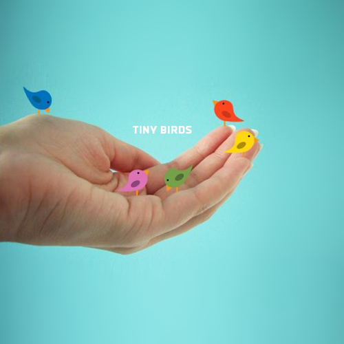 Tiny Birds Debut Album